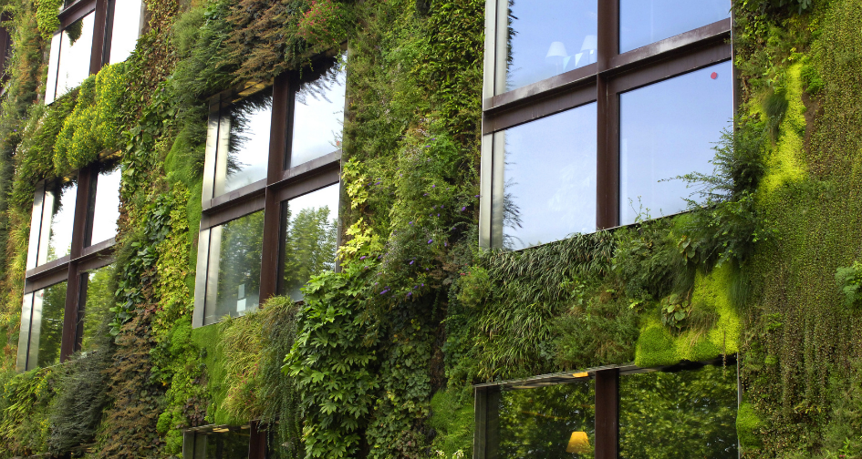 Les murs végétaliser, comment mêler l'utile à l'agréable