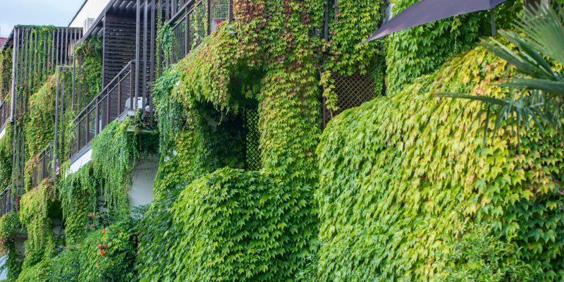 mur végétalisés