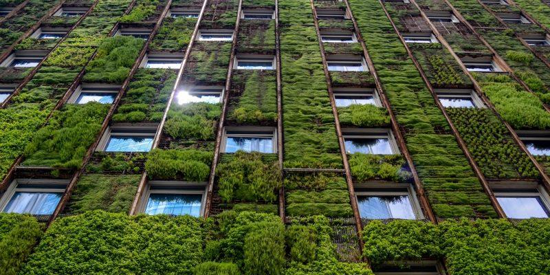 Les murs végétalisés